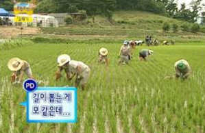 Infinity Challenge Rice Farming Project